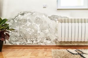 All This Wet Weather Could Be Inviting a Very Unwanted Guest Into Your Home