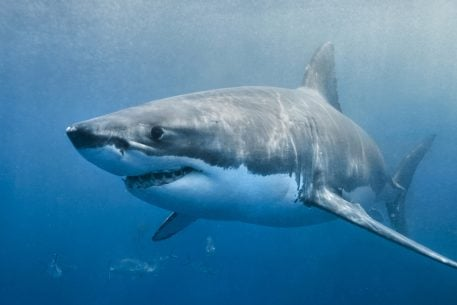 Happy Shark Week. Here's What to Do if You're Bitten by a Shark.