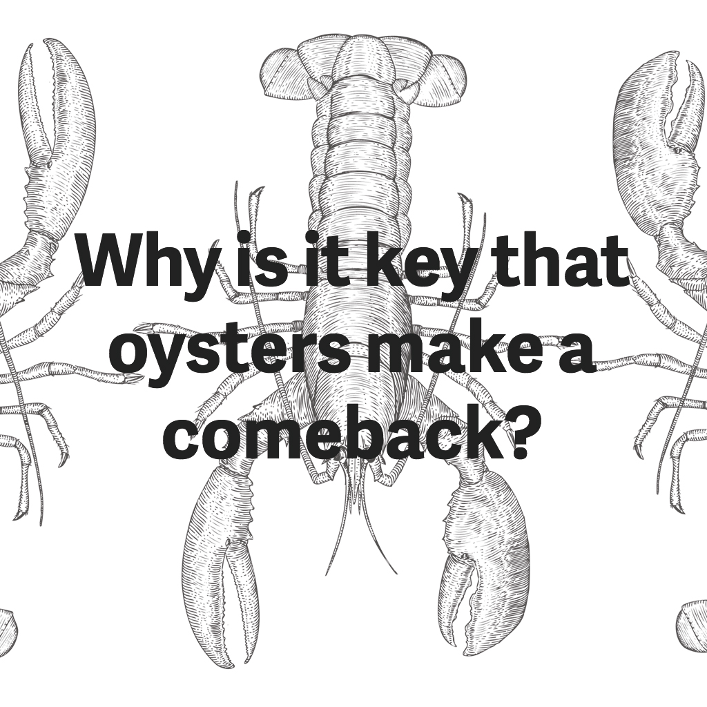 chesapeake-bay-oysters-comeback