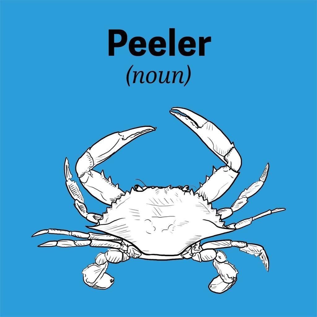 chesapeake-bay-vocab-peeler