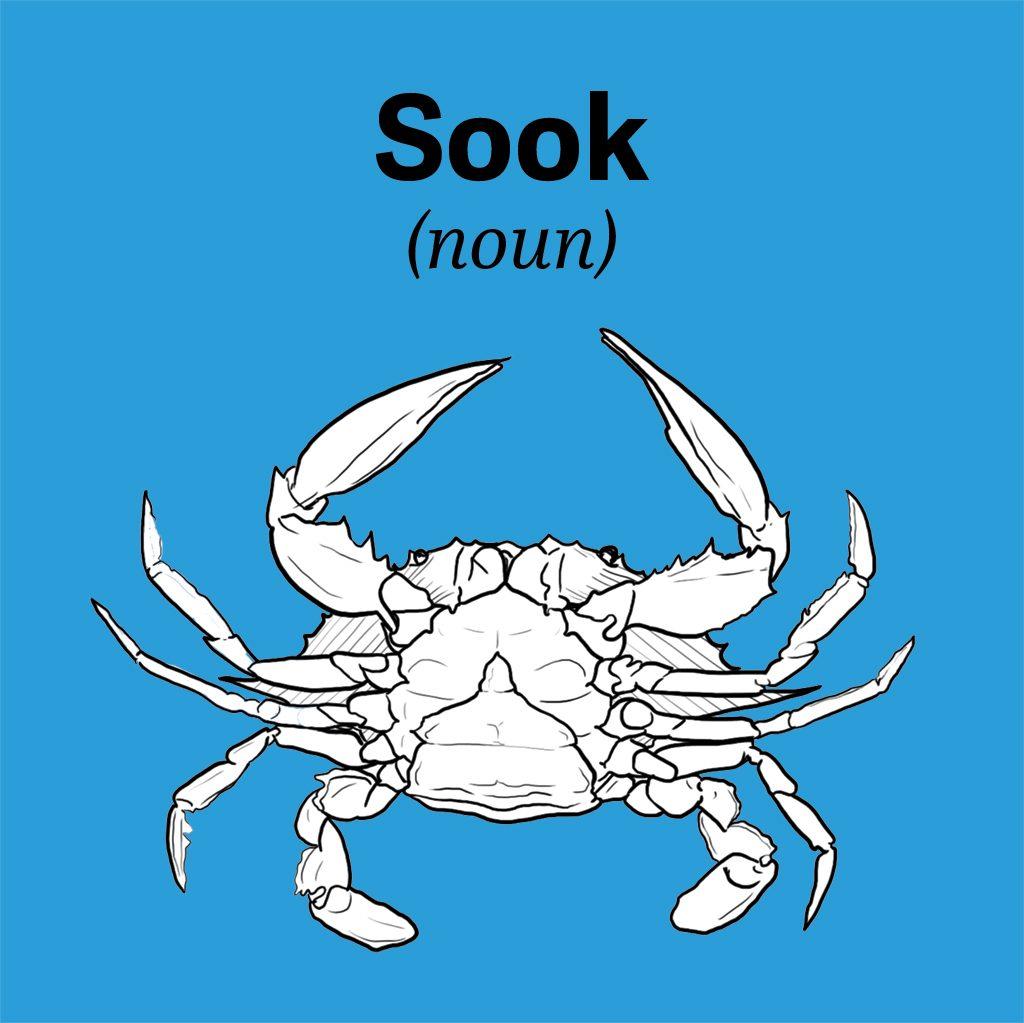 chesapeake-bay-vocab-sook