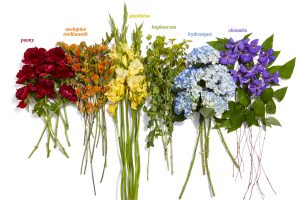 A Literal Rainbow of Flowers That Absolutely Anyone in DC Can Grow