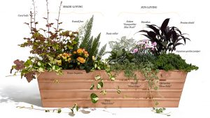 How to Build—and Maintain—the Perfect Window Box