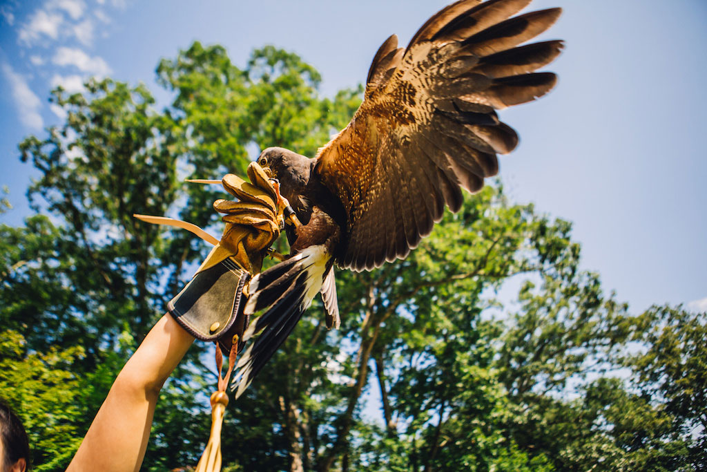 7-21-16-falconry-proposal-engagement-virginia-omni-homestead-resort-2