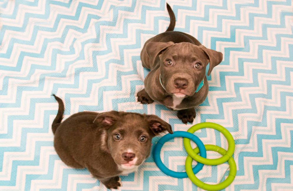 Free Puppies!