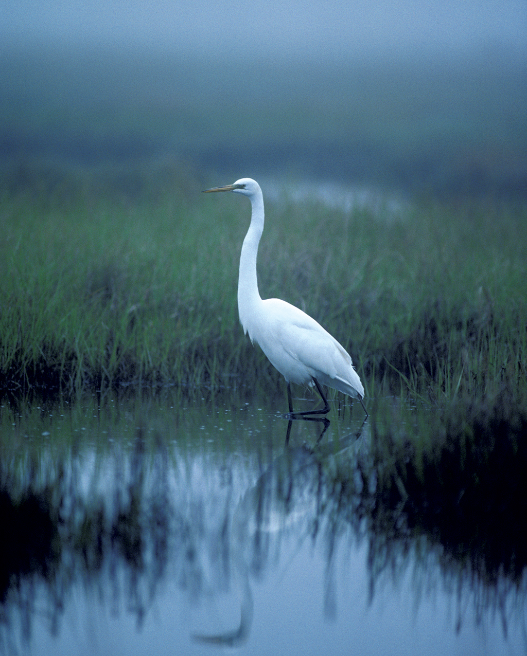Photograph of egret by WorldFoto/Alamy.