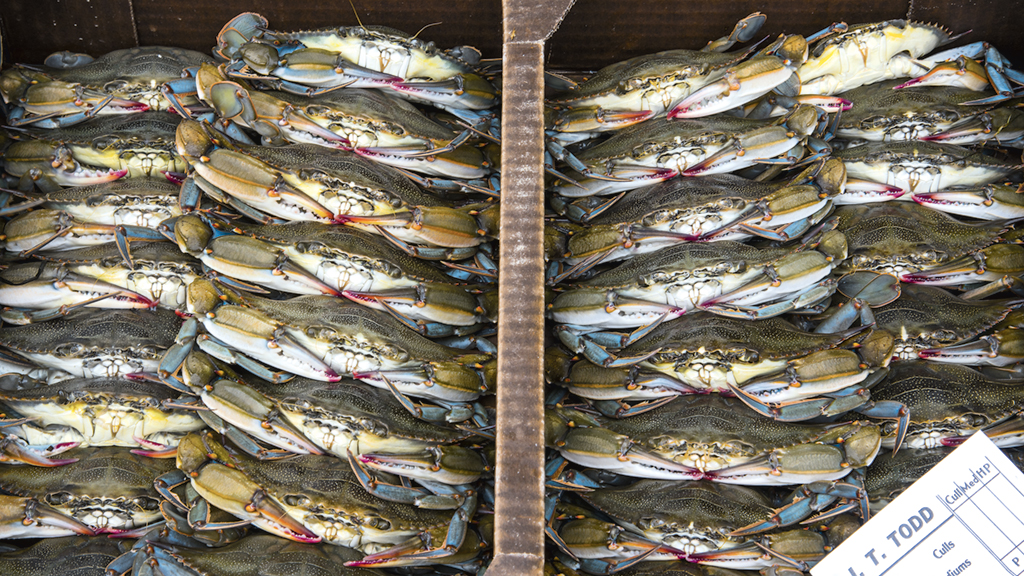 local crabs Photograph by Jay Fleming .