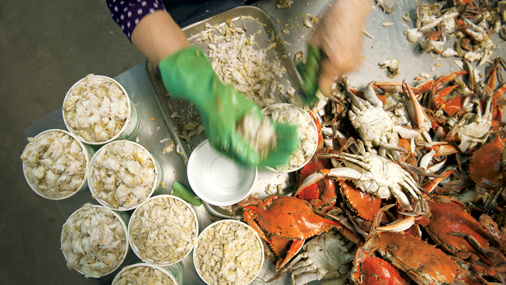 Fresh Chesapeake Bay crab. Photograph by Jay Fleming.