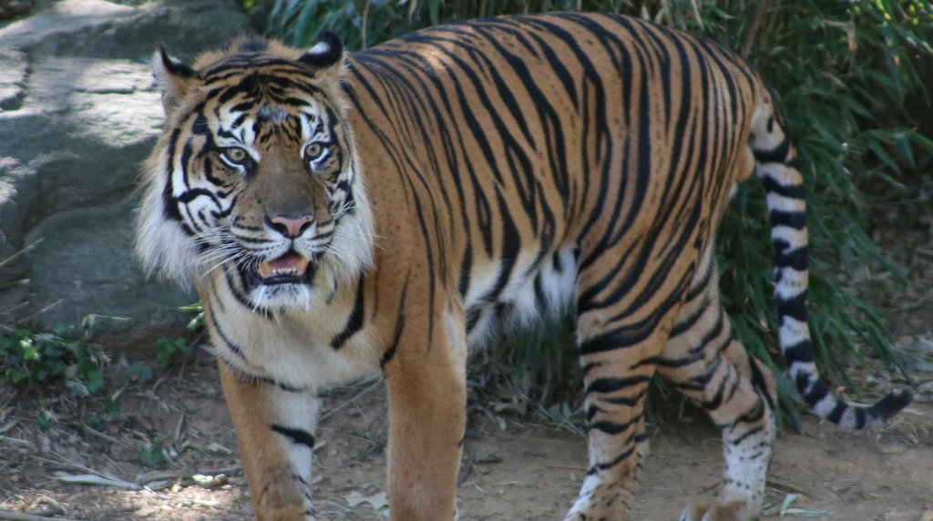 A Sex Tiger Came to Washington Last Year, and Wow, He's Been Busy