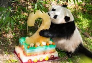 Things to Do in DC this Weekend (August 18-21): Chuck Brown Day, A Pun Battle, and Panda Birthday Parties