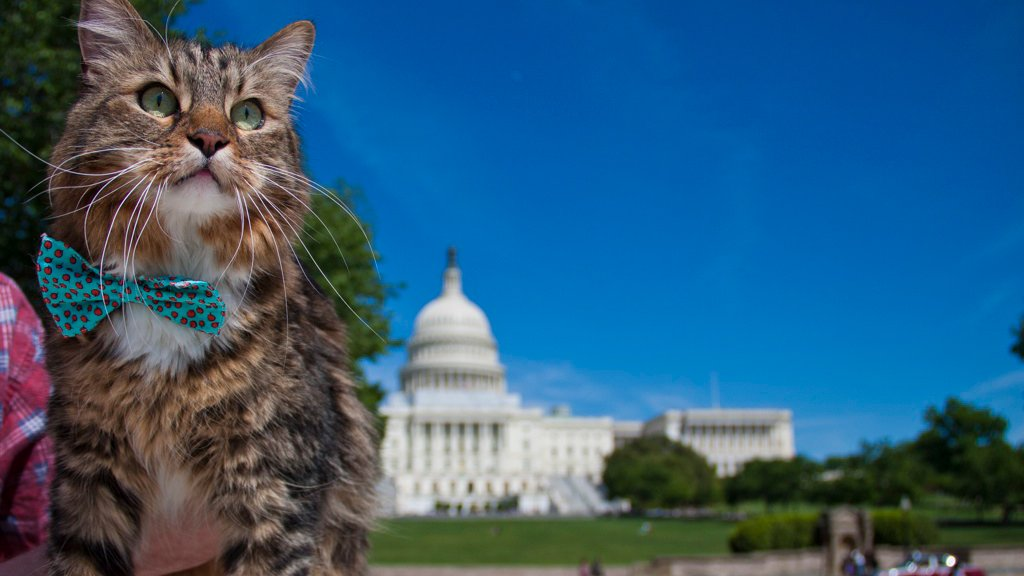 Things to Do in DC this Weekend (August 11-13): Star Wars Day at Nats Park, the 14th Street Burger Battle, and a Hank the Cat Documentary