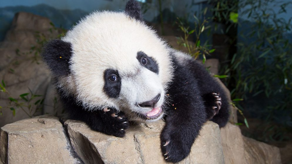 The Cute Animal Friends Who Could Have Livened Up Bei Bei's Birthday Party