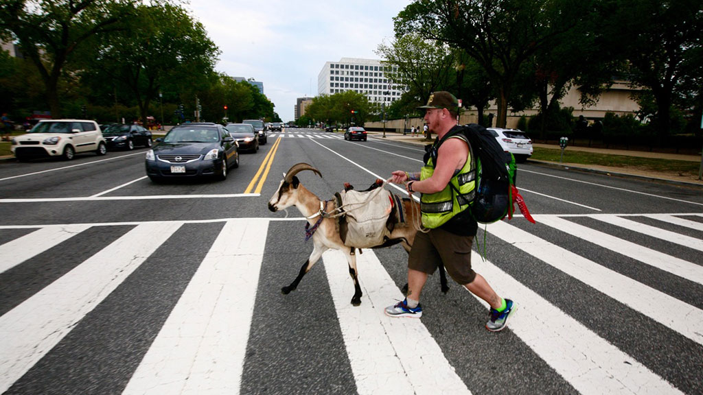 Miles Goat