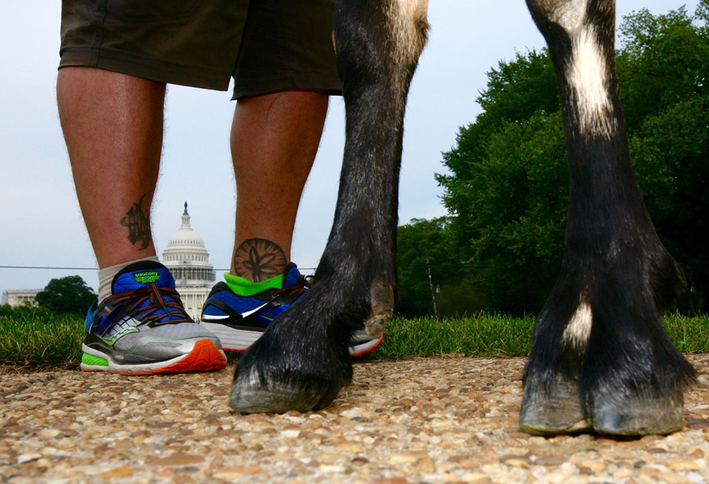 """""""I'm the Dang Goat's Pack Animal,"""" Says Man Walking Across America With Goat"""
