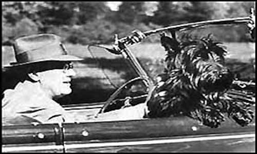 Fala riding in the car with President Franklin D. Roosevelt. Taken by an employee of the Executive Office of the President of the United States.