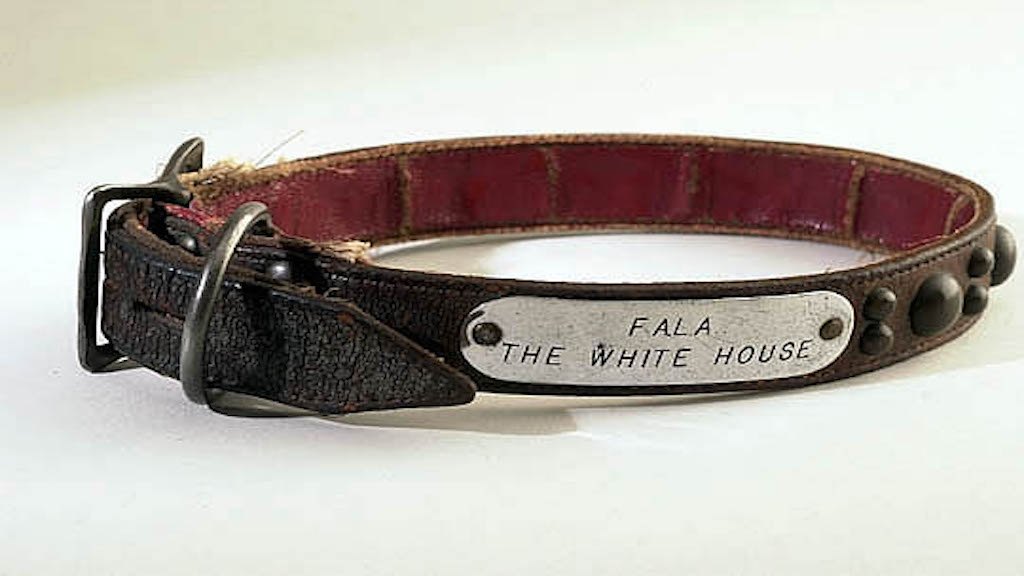 Fala's engraved silver and leather collar. Photograph taken by an employee of the National Park Service.