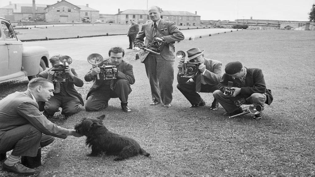 Fala, FDR's Scottish Terrier poses for photographers outside the Quebec Conference in August 1943. Photograph taken by an employee of the Executive Office of the President of the United States.