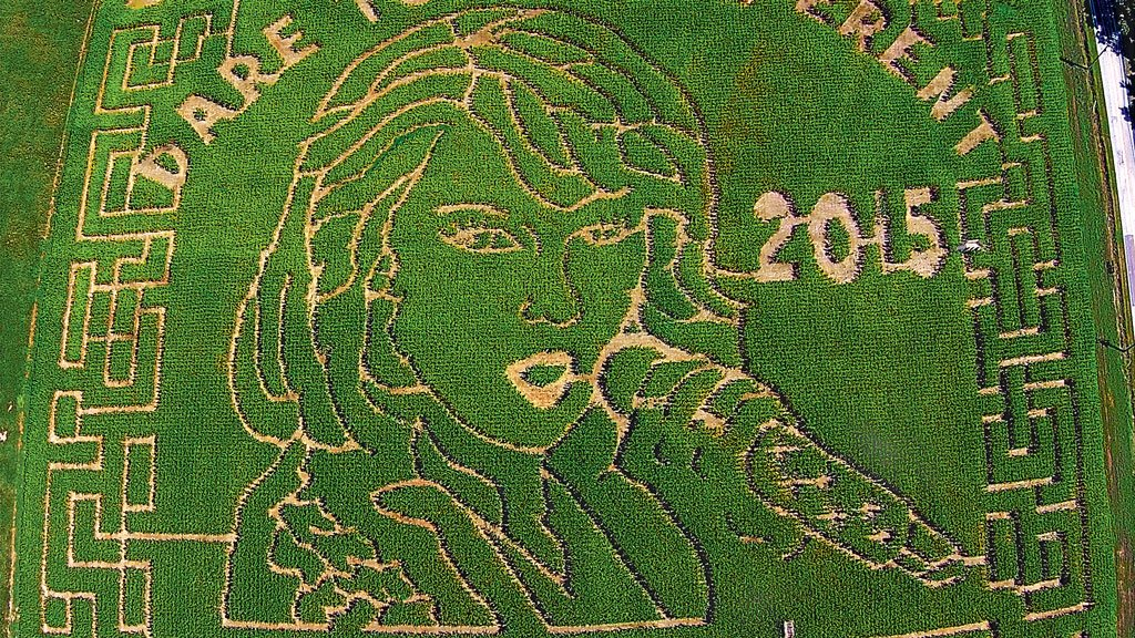 A Baltimore Orioles Corn Maze Has Replaced Taylor Swift's Face