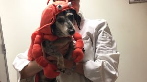 These Dogs in Costume Will Make You Wish Every Day Was Halloween