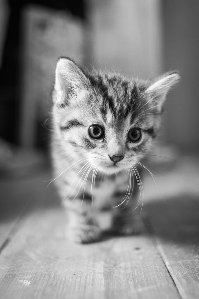 andreas-nadler-kitten