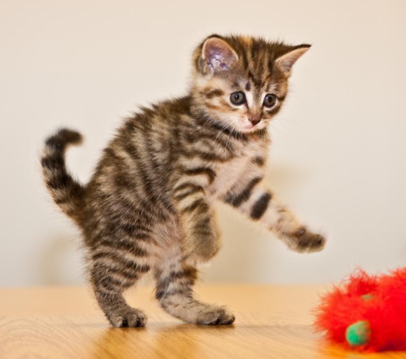 brian-scott-kitten