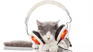 This Music is Scientifically Proven to Make Your Cat Happy—and the UK Is Loving it