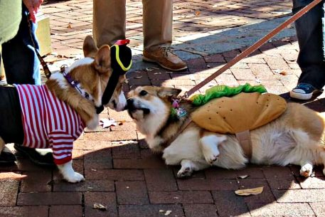 Things to Do in DC This Weekend (October 27-30): Bentzen Ball, a Cider Festival, and a Corgi Parade