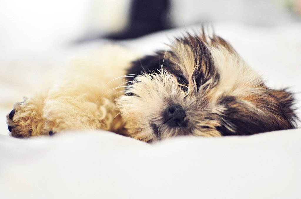 hannah-mojica-puppy