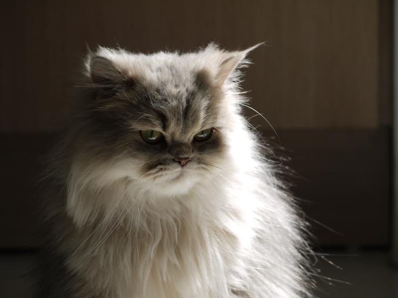 magnus-brath-kitten
