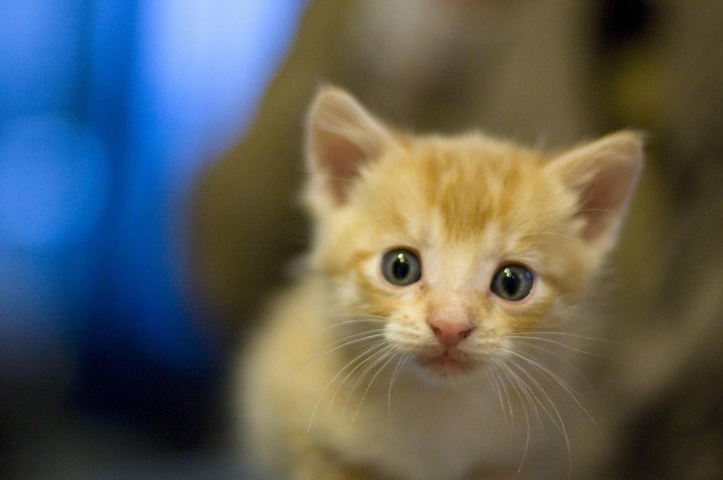 nicole-kelly-kitten