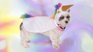 9 Cool Pet Costumes That Put Human's Halloween Costumes to Shame