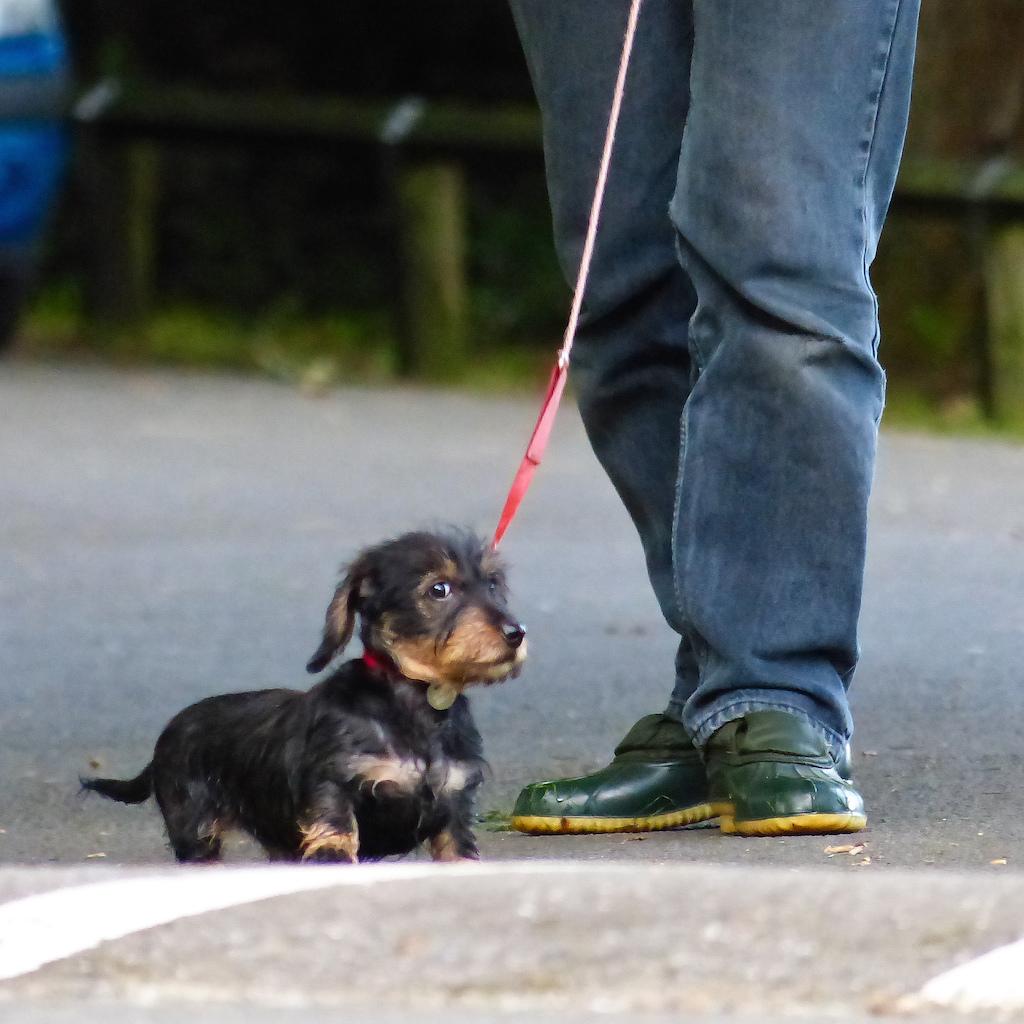 stewart-black-puppy
