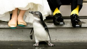 When You Marry at the Maryland Zoo, Your Wedding Pictures Include Penguins and Giraffes