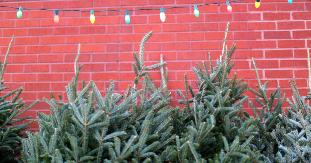This DC Startup Will Bring You a Live Christmas Tree—And Set It Up