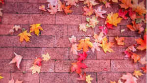 20 Photos That Prove Just How Magical Fall in DC Really Is