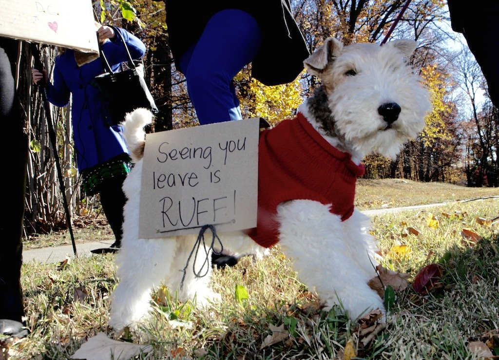 Trey, a wire hair fox terrier during a rally for Vice President Joe Biden