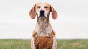 Cutest Dog Contest Archives | Washingtonian