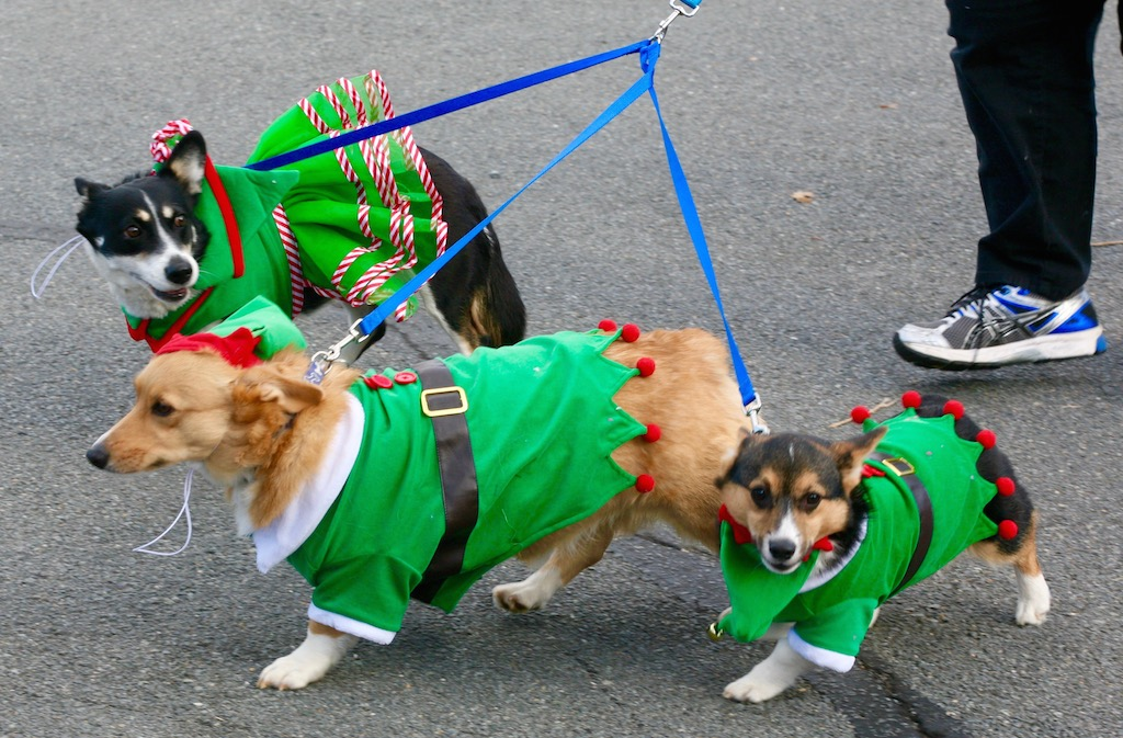 Here Are Lots of Pictures of Dogs in Christmas Outfits ...