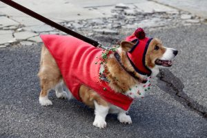 Here Are Lots of Pictures of Dogs in Christmas Outfits