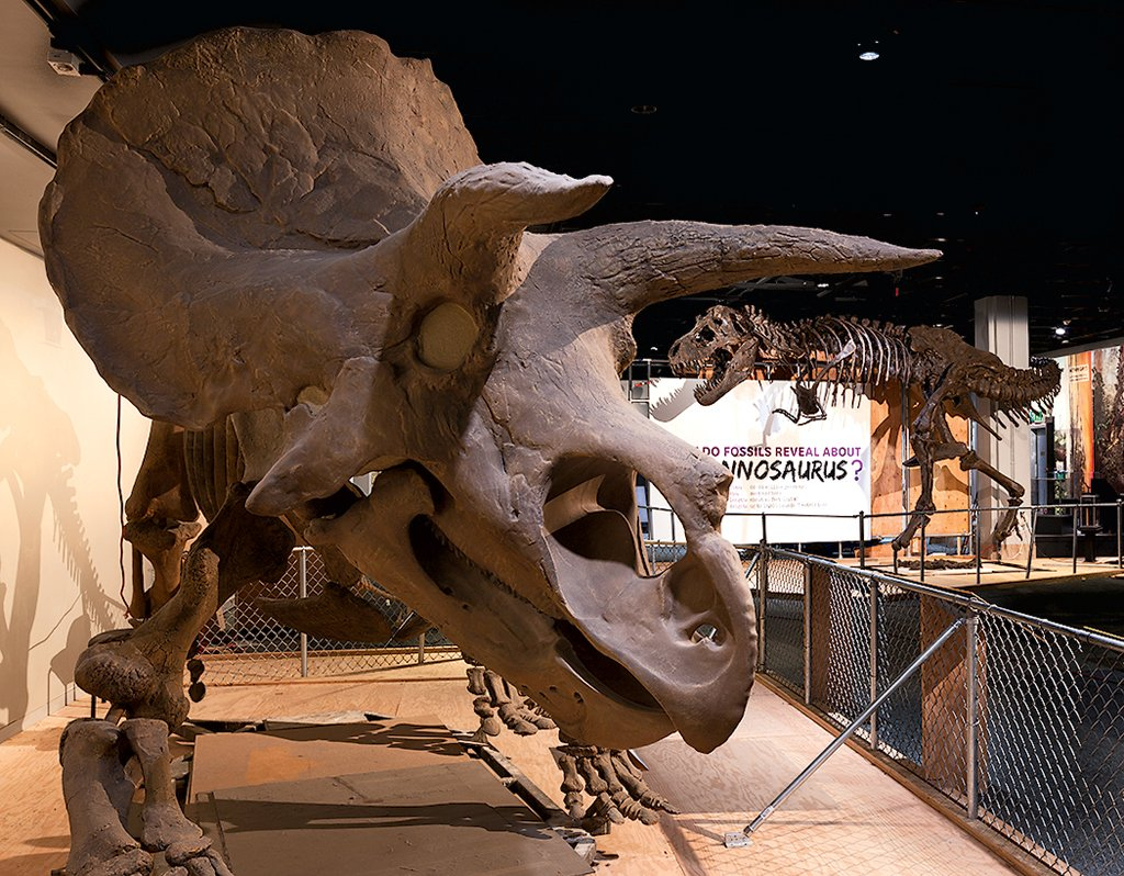 Fossilized dinosaur skeletons at the National Museum of Natural History. Photograph by Donald E. Hurlbert.