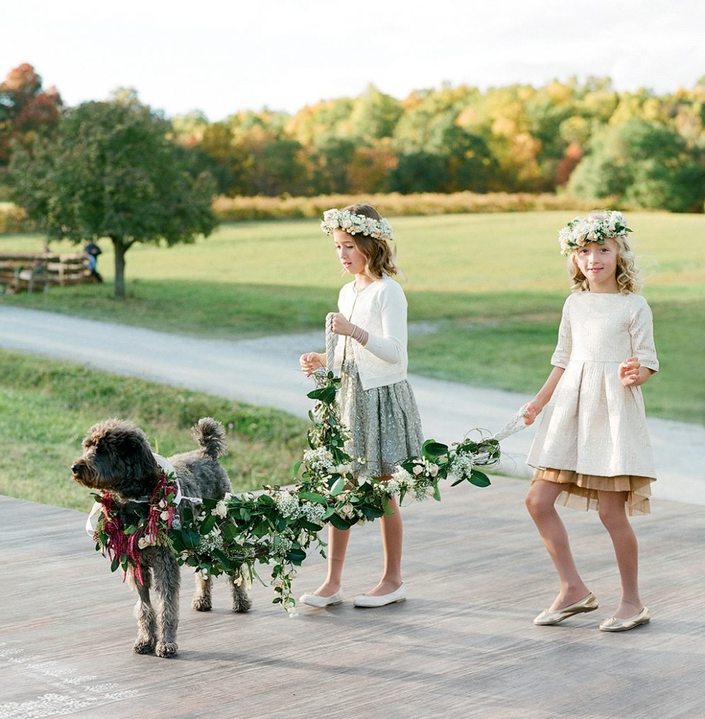 How to Train Your Dog to Walk Down the Aisle At Your Wedding