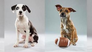 The Puppy Bowl Will Feature Six Dogs From Washington Rescue Facilities
