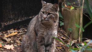 Some DC Schools Suspend Outdoor Activities Because of Rogue Bobcat