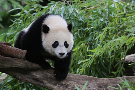 """Adorable Photos of Bao Bao That Will Have You Chanting """"Four More Years"""""""