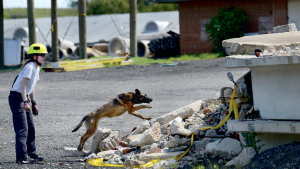 DC's Badass Rescue Dogs Will Save You Anywhere, Anytime