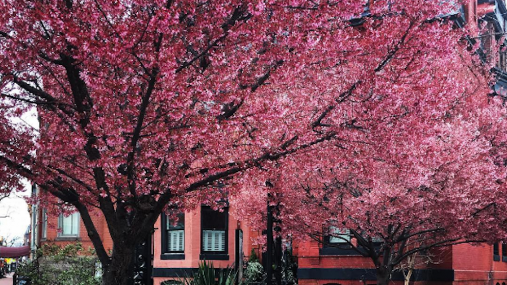 Instagram Photos: Blossoms Make Everything Better