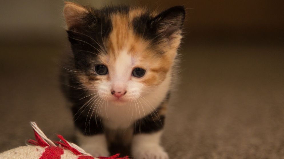 Voting Is Now Open for Washingtonian's Cutest Cat Contest