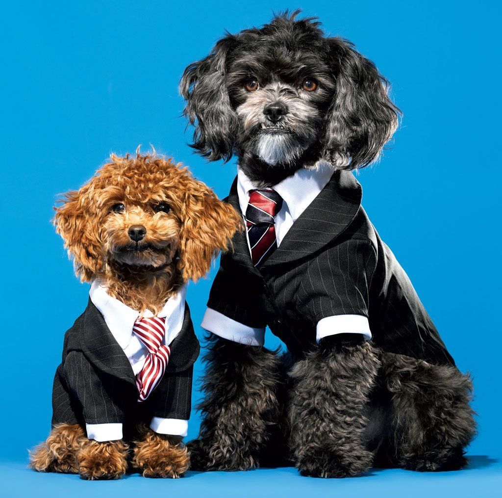 The Number Of Workplaces That Permit Dogs Has Increased From 4 Percent In 2014 To 7 Today According Society For Human Resource Management