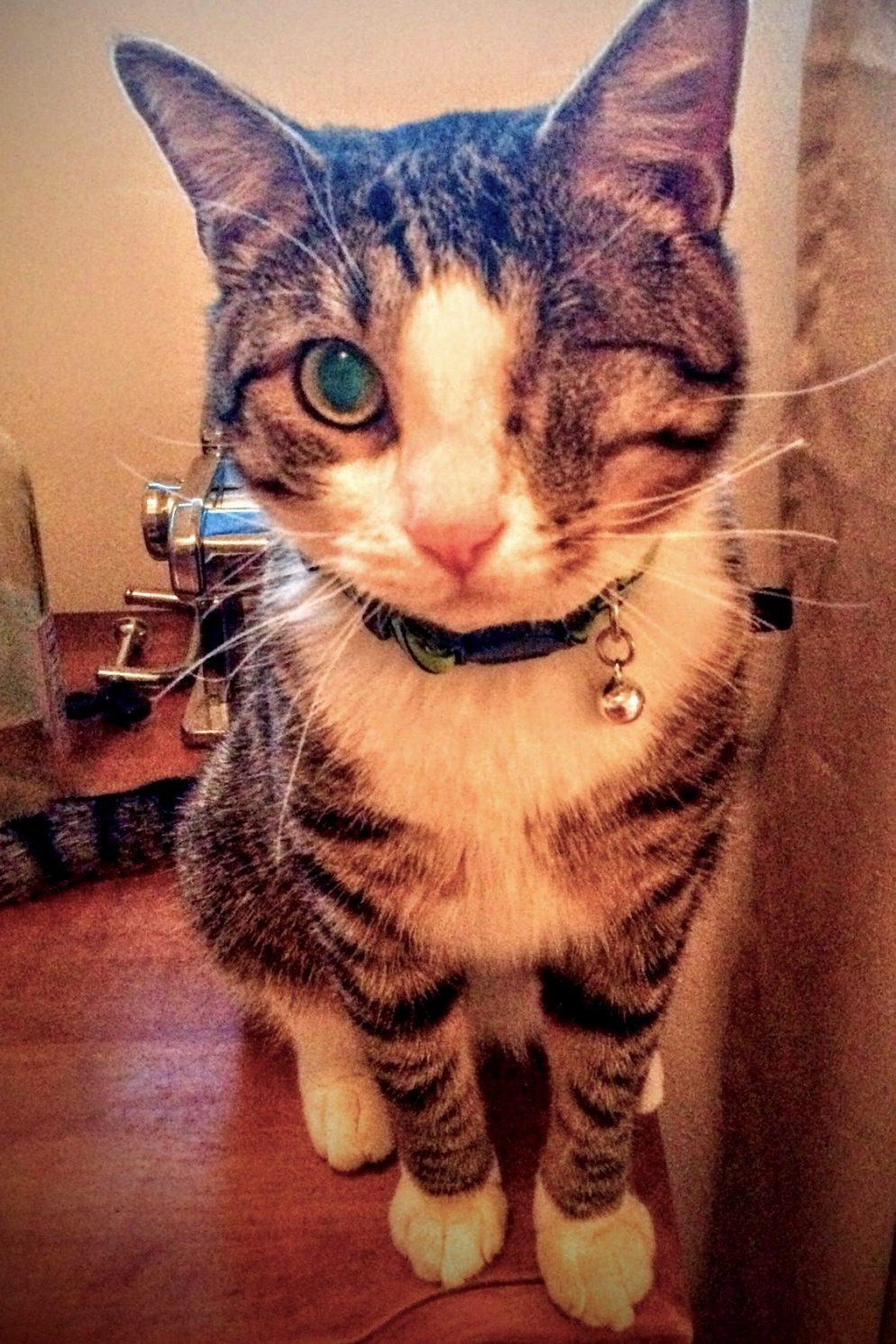 "Professor Alastor ""Mad Eye"" Moody Is the Cutest Cat in Washington"