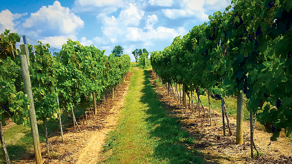 A Maryland Wine Country Day Trip